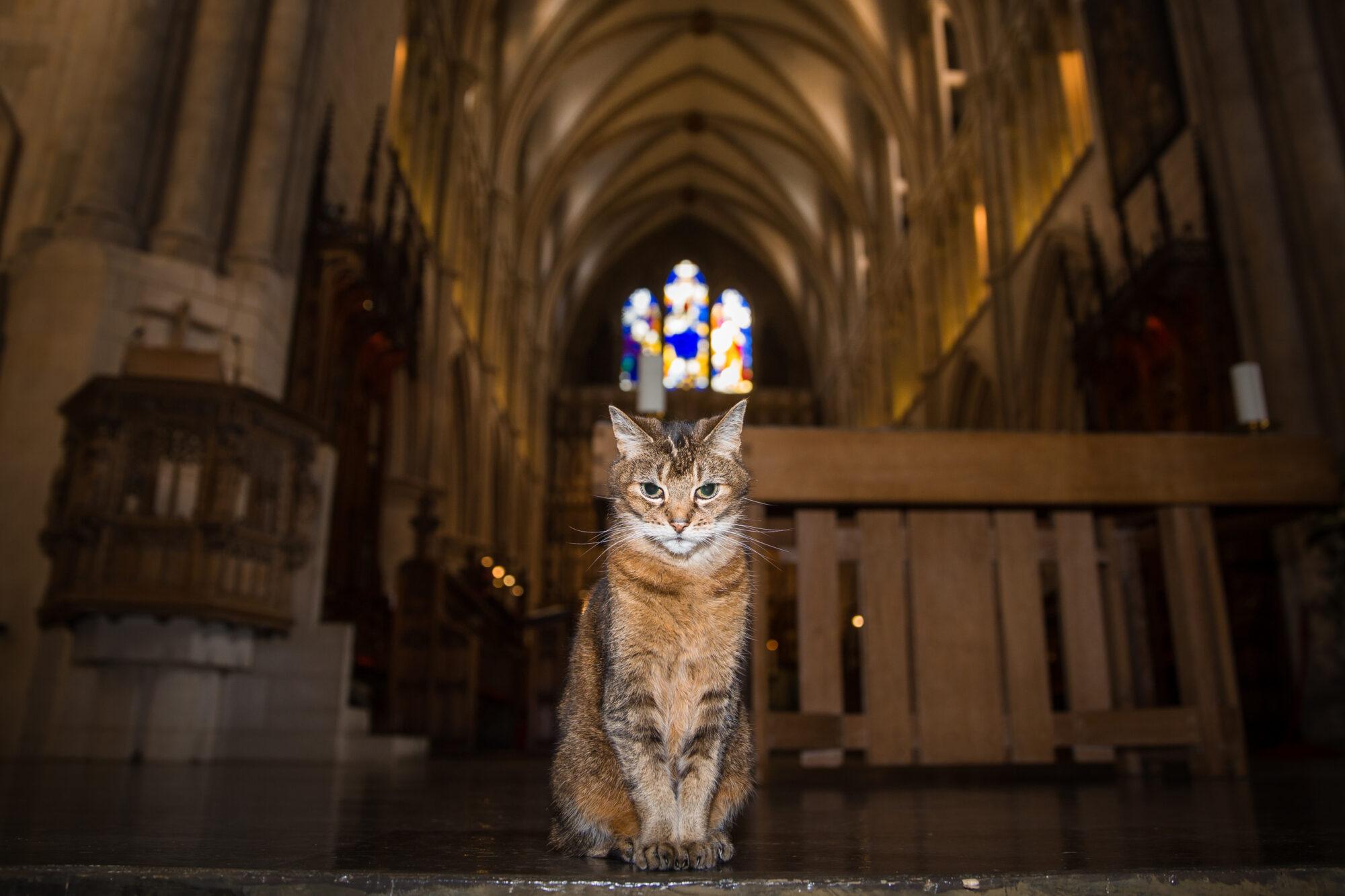 ある野良猫の追悼礼拝 ロンドン サザーク大聖堂